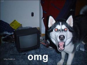 OMG husky