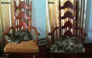 cat before and after