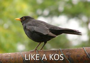 likeakos