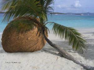 prehnojena palma