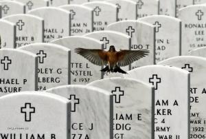 foto tyzdna  USA  Narodny cintorin