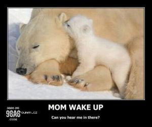 mam bear