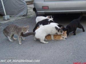 Kocici Grupac