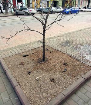 oblibenej strom