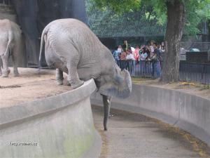 hungryelephant2ky