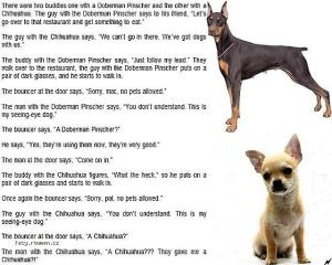 Doberman vs Chihuahua