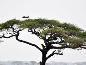 korist na strome
