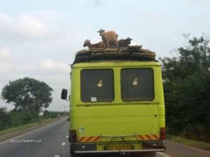 Kozy na korbe