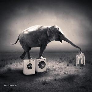 cistotnej slon