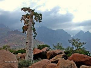 Socotra Island 10