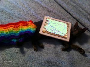 kitty56146