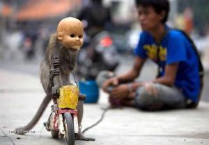 mutant na kole
