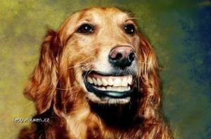 zubatej cokl
