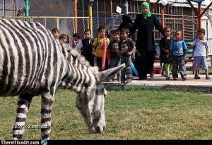 zebra bola prilis draha