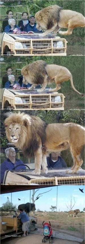 live safari