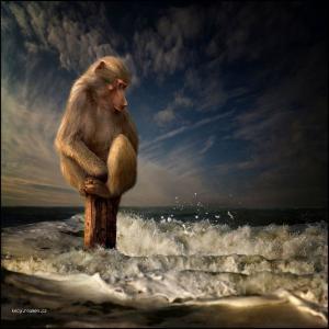globalni otepleni a zbytek primatu na svete