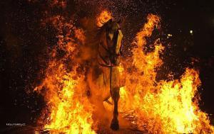 Horse in fire