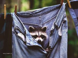 chci jeansy