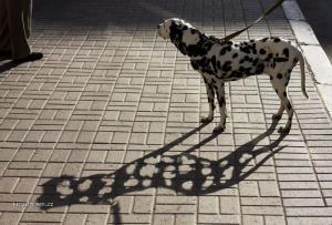 dirkovatej pes