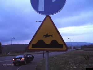 pozor skakaci zraloci