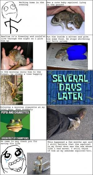 X Squirrel bro