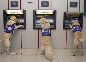 dog cashpoint