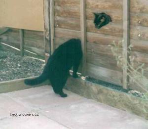 looong cat