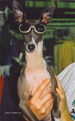 Doggles dog for site