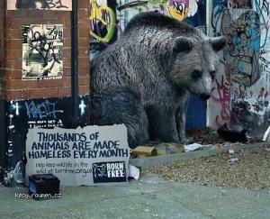 Keep Wildlife in the Wild Creative Ads2