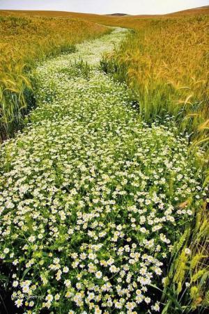 cesta kvetin