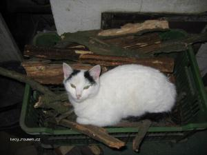 pohodlne kocici spani II