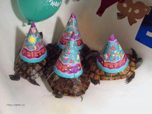 narozeninova party