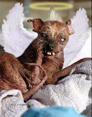 Sam  najskaredsi pes na svete