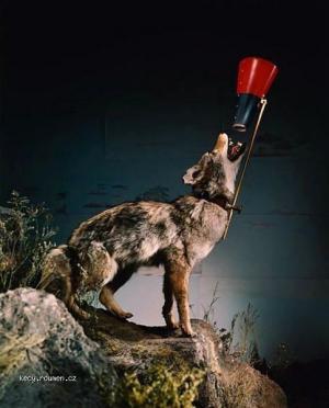 X Modern Wolf