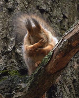 Squirrel facepalm