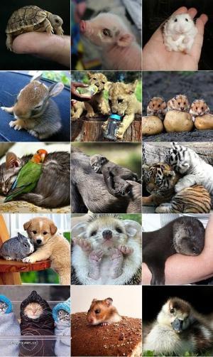 Cutie Baby Animals