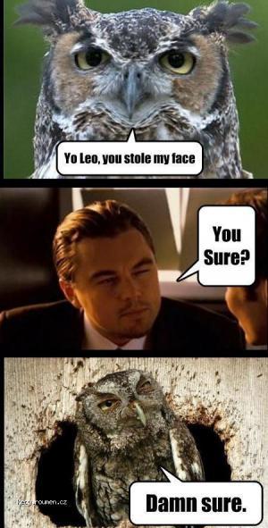 stole face