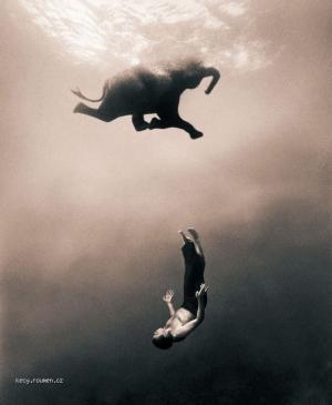 slon plavec