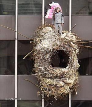 This Is MY NEST