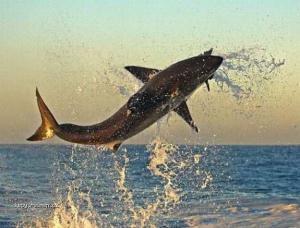 lovi nad vodou