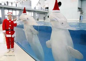 hezke Vanoce od delfinu