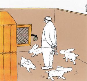 Když máš králíčky vycvičené