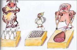 Závod mezi krávou, prasetem a kuřetem v pojídání