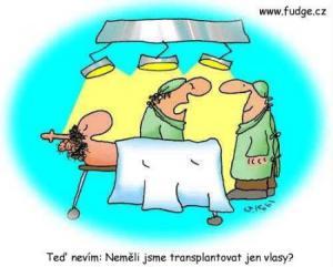 Neměli jsme transplantovat jen vlasy?