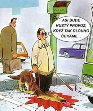 Nehoda se slepeckým psem