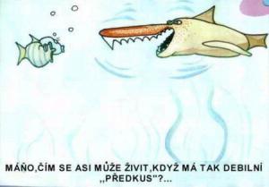 Jak přemýšlí ryba, když vidí žraloka