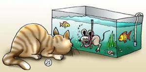 Jak kočka loví ryby po domácku