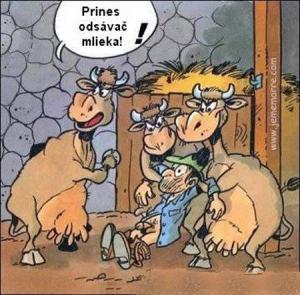 Jak by to vypadalo, kdyby převzaly vedení krávy