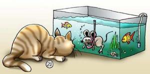Vychytralá myš vs. kočka, která se bojí vody