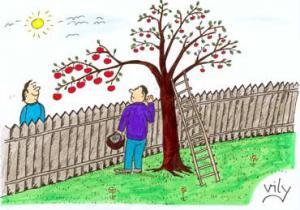 Když máš na zahradě strom, který čouhá k sousedovi